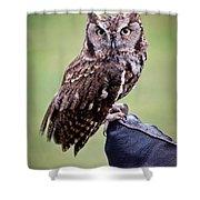 Screech Owl Perched Shower Curtain by Athena Mckinzie