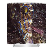Scribbled Leatherjacket, Aluterus Shower Curtain