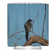 Scrub Jay Private Eye Shower Curtain