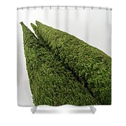 Sculpturesque Greenery - Three Cypress Trees Chiseled Against The Sky Shower Curtain