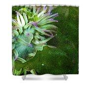 Sea Anemone And Kelp  Shower Curtain