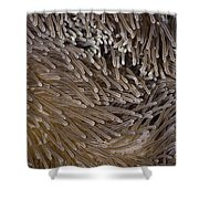 Sea Anemone Closeup Shower Curtain