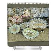 Sea Anemones Shower Curtain