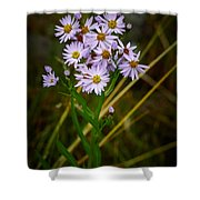 Sea Aster Shower Curtain