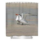 Sea Bird Song Shower Curtain