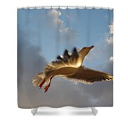 Sea Birds 12 Shower Curtain