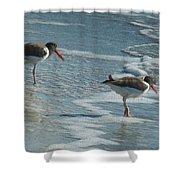 Sea Birds #2 Shower Curtain