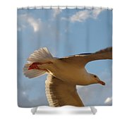 Sea Birds 9 Shower Curtain