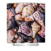 Sea Bones 22 Shower Curtain
