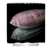 Sea Bones 25 Shower Curtain