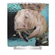 Sea Cow Swimming Underwater Shower Curtain
