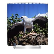 Sea Eagle Shower Curtain