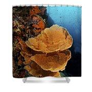 Sea Fan Coral - Indonesia Shower Curtain