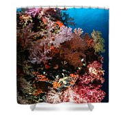 Sea Fans And Soft Coral, Fiji Shower Curtain