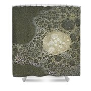 Sea Foam Over Sand Dollars Shower Curtain