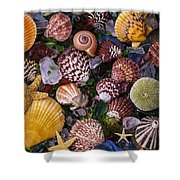 Sea Glass With Sea Shells Shower Curtain