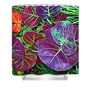 Sea Grape  Shower Curtain
