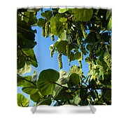 Sea Grapes In Summer Shower Curtain