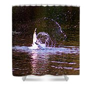 Sea Gull Abstract Shower Curtain