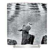 Sea Gull Black And White Shower Curtain