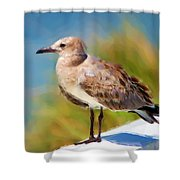 Sea Gull Of Boca Grande Shower Curtain