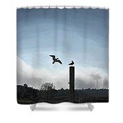 Sea Gulls Playing Bird Tag Shower Curtain