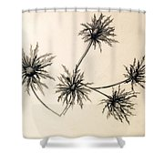 Sea Holly Shower Curtain