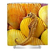 Sea Horse And Sea Shells Shower Curtain