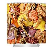 Sea Horses And Sea Shells Shower Curtain