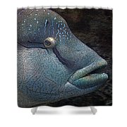 Sea Life 19 Shower Curtain