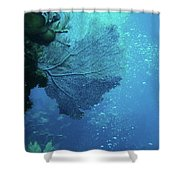 Sea Life- An Answer Of Peace Shower Curtain