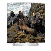 Sea Lion Chorus Shower Curtain