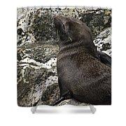 Sea Lion Close-up Shower Curtain