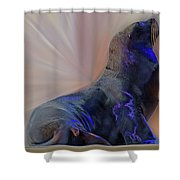 Sea Lion Constancesart Shower Curtain by Constance Lowery