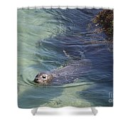 Sea Lion In Clear Blue Waters Shower Curtain