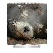 Sea Lion In San Francisco Shower Curtain