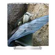 Sea Lion Itch Shower Curtain