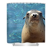 Sea Lion Or Seal Shower Curtain