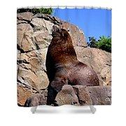 Sea Lion Shower Curtain