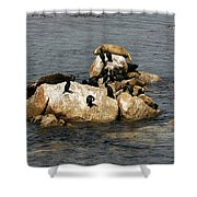 Sea Lions And Birds Shower Curtain