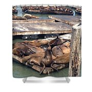 Sea Lions And Seagull Shower Curtain