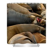 Sea Lions At Pier 39 San Francisco Shower Curtain