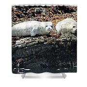Sea Lions At Sea Lion Cove State Marine Conservation Area Shower Curtain