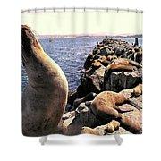 Sea Lions On Rock Pier Shower Curtain