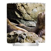 Sea Lions Shower Curtain