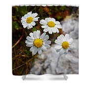 Sea Mayweed Shower Curtain