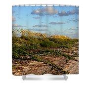 Sea Oats Along The Beach Shower Curtain