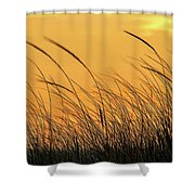 Sea Oats At Dusk Shower Curtain