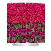Sea Of Tulips Shower Curtain