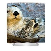 Sea Otter Portrait Shower Curtain